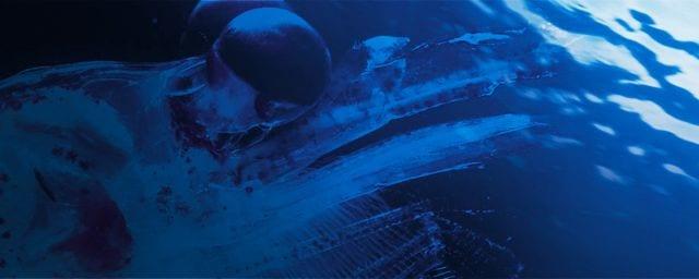 Conoscete l'olio di krill?